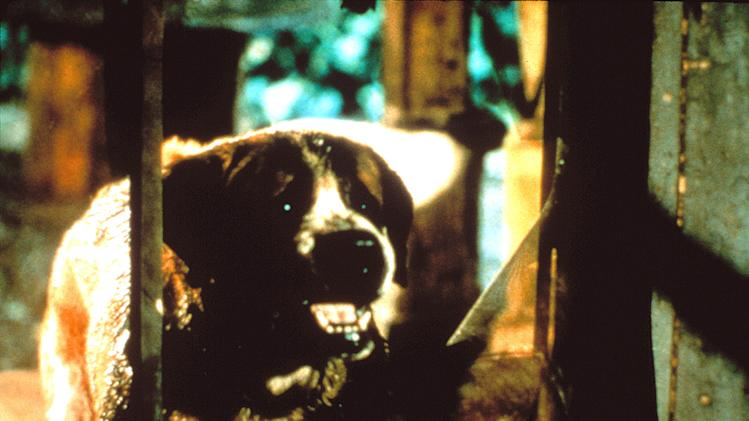 5 Most frightening killer animals Cujo