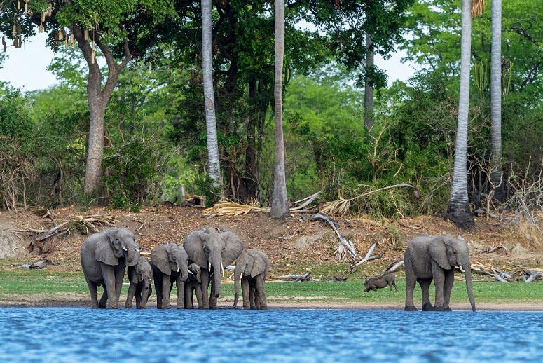 500 African Elephants Are Moving to a New Home