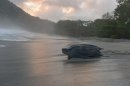 In this May 2, 2013 photo, a leatherback turtle heads back into the ocean after burying her clutch of eggs in the sand at daybreak on a narrow strip of beach in Grande Riviere, Trinidad. In years past, poachers from Grande Riviere and nearby towns would ransack the turtles buried eggs and hack the critically threatened reptiles to death with machetes to sell their meat in the market. Now, the turtles are the focus of a thriving tourist trade, with people so devoted to them that they shoo birds away when the turtles first start out as tiny hatchlings scurrying to sea. (AP Photo/David McFadden)
