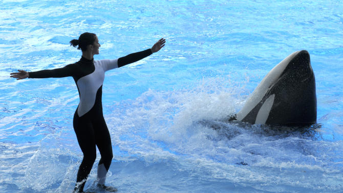 In a  March 7, 2011 photo, trainer Amber Seymour, left, works with killer whale Katina during the Believe show in Shamu Stadium at the SeaWorld Orlando theme park in Orlando, Fla. SeaWorld's three theme parks are slowly working to get trainers back in the water with killer whales, one year after a 6-ton orca named Tilikum suddenly dragged a trainer off a platform by her hair and drowned her.  (AP Photo/Phelan M. Ebenhack)