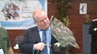 Toronto Mayor Rob Ford meets Alexandra the Great Horned Owl at the Sportsmen&#39;s Show on Thursday.