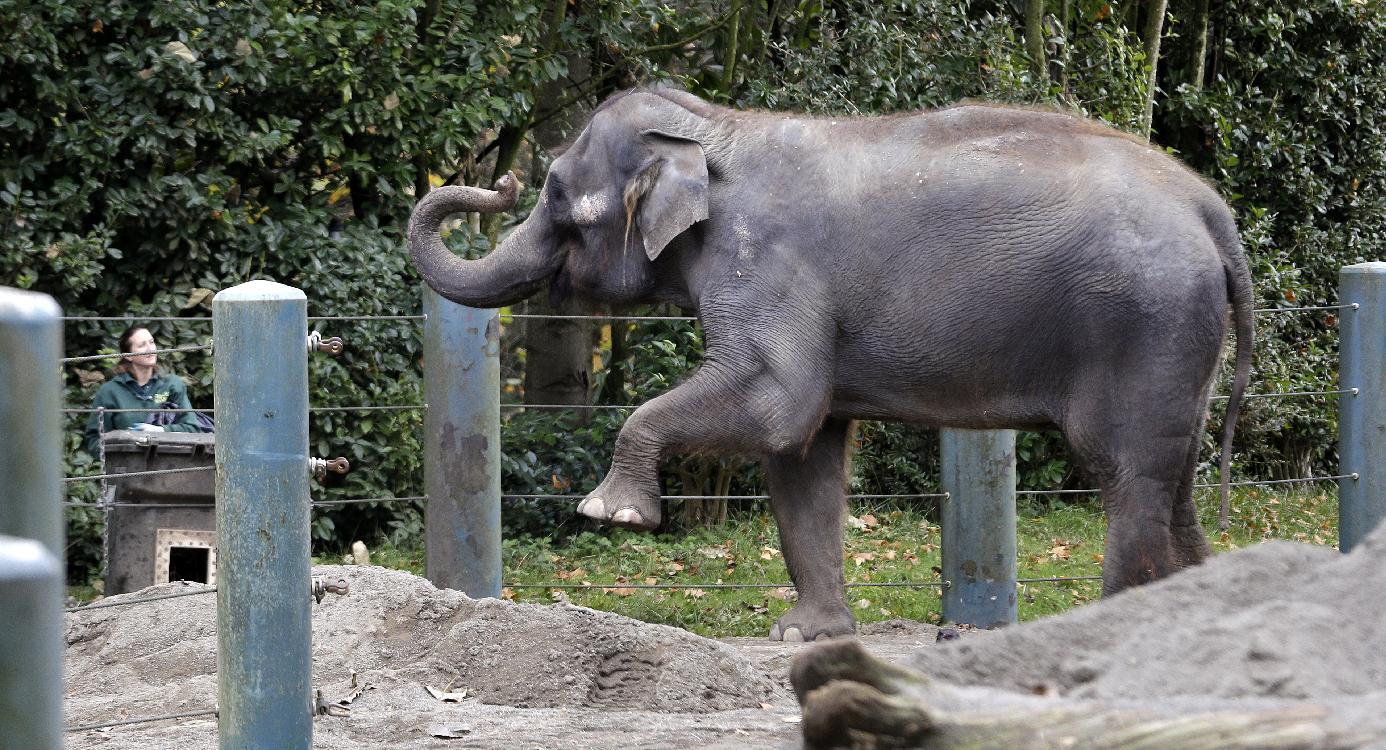 Seattle sending elephants to Oklahoma City Zoo