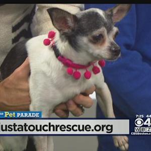 Pet Parade: Just A Touch Rescue