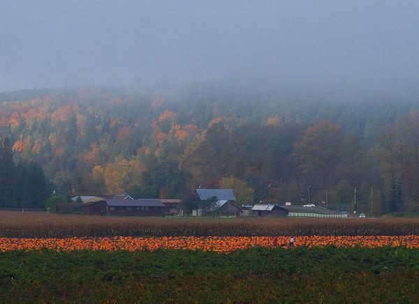 Where Near Seattle to Pick Your Own Pumpkins, Mapped!