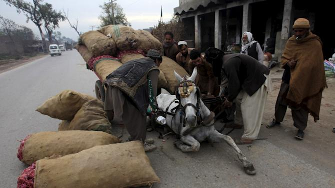 People help lift a horse who slipped pulling a cart, overloaded with sacks of onions, on outskirts of Peshawar