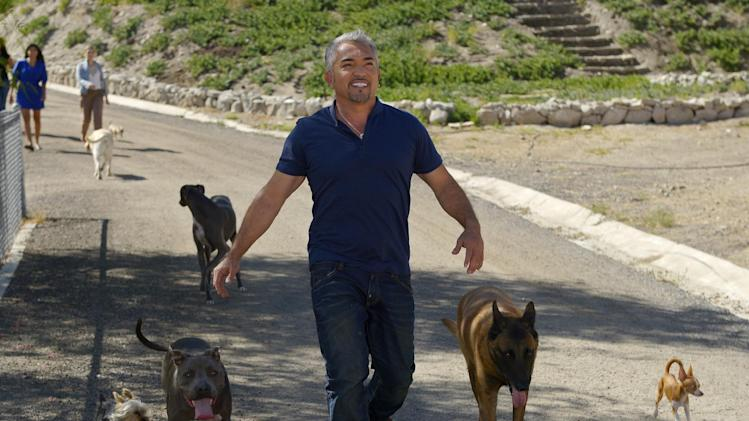 In this Oct. 18, 2012 photo, Cesar Millan walks down to his horse stables with his dogs at his Dog Psychology Center, in Santa Clarita, Calif. At 13, his dream was to become the best dog trainer in the world. At 21, alone and unable to speak English, he crossed the border and lived on the streets for two months before getting a job as a groomer and walker. AP Photo/Mark J. Terrill)