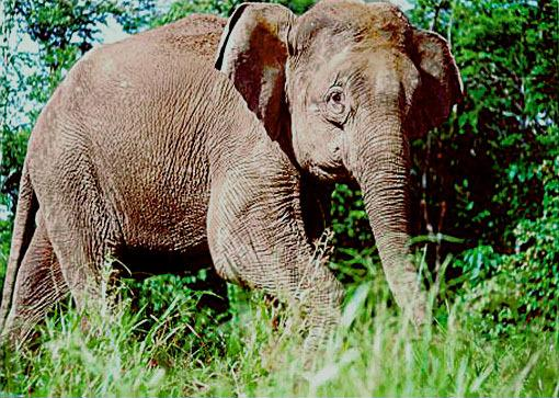 Is Every Single Elephant a Village-Wrecking Booze Hound?