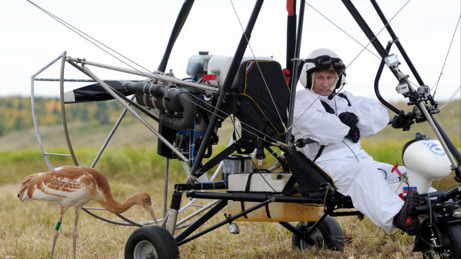 """FILE - In this Wednesday Sept. 5, 2012 file photo, Russian President Vladimir Putin waits in a motorized hang glider next to a Siberian white crane, on the Yamal Peninsula, in Russia. On Thursday, Nov. 1, 2012, Interfax reported that Putin's spokesman Dmitry Peskov said the president had pulled a muscle. """"It happened before Vladivostok. He was suffering from muscle pain then"""", Peskov said. Peskov told state news agency RIA Novosti this was an old injury and denied it was caused by his flight with cranes. (AP Photo/RIA-Novosti, Alexei Druzhinin, Presidential Press Service, File)"""