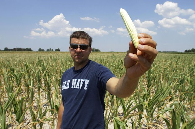 Steve Niedbalski shows his drought and heat stricken corn, Wednesday, July 11, 2012 in Nashville Ill. Farmers in parts of the Midwest are dealing with the worst drought in nearly 25 years.(AP Photo/Seth Perlman)