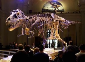 "File photo of the dinosaur named ""Sue,"" a 41-foot-long Tyrannosaurus rex on display at the Field Museum in Chicago"