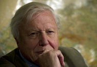 File photo shows British scientist and broadcaster David Attenborough in London in November 2011. A newly discovered Australian spider measuring little more than a millimetre in length has been named after Attenborough, reports said Saturday