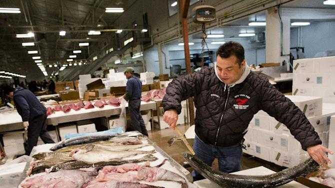 Roberto Nunez, a buyer for multiple high-end New York establishments, including Eataly Gourmet Food Market, checks a fish for purchase at the Fulton Fish Market, Friday, March 29, 2013, in New York. The Fulton Fish Market, located in the Hunts Point neighborhood of the Bronx, is the world's largest after Tokyo. In this football-field size refrigerated building, time and money is measured in thousand-dollar pieces of salmon whose price-for-quality is negotiated on the spot. The product goes to the buyer instantly and is trucked to restaurants or retail vendors. (AP Photo/John Minchillo)