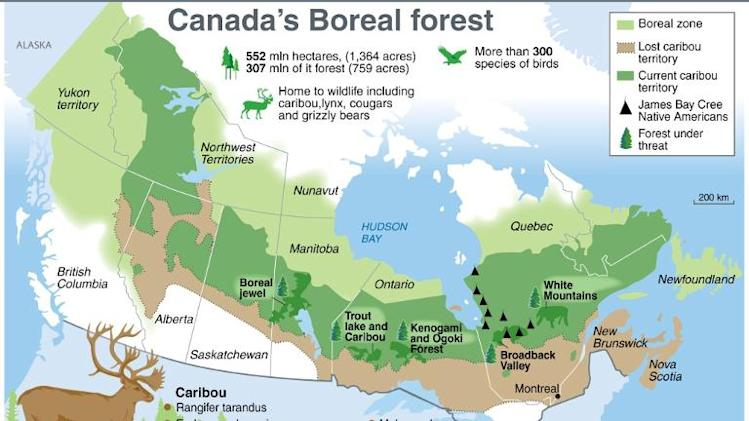 Boreal Forest Boreal Forest Canada Map