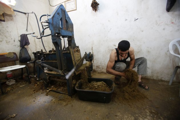 A worker fluffs tobacco in a workshop in village near Jenin