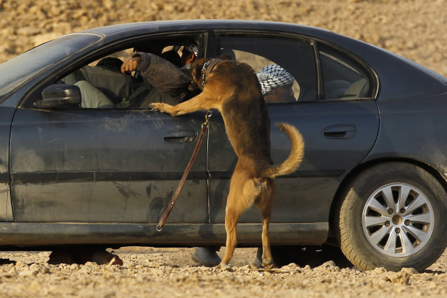 A military dog attacks a simulated …