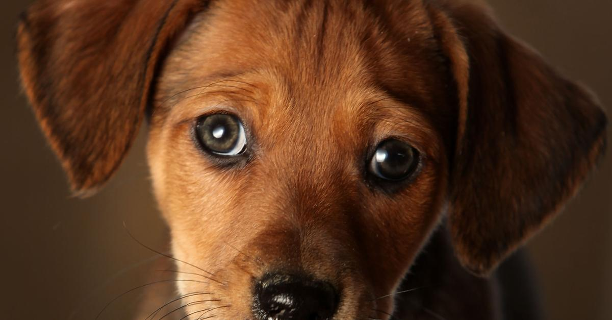 50 Cutest Puppy Pics of All-Time