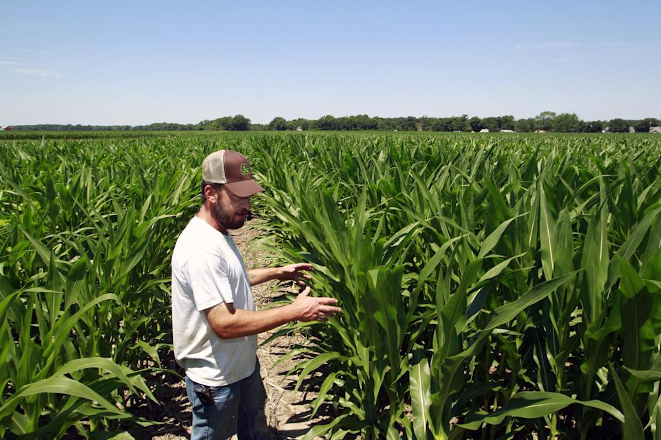 Pat Giberson checks on his corn crop in Pemberton, N.J., Friday, July, 6, 2012. Despite extremely dry conditions and temperatures in the 90's, Giberson says compared with the crops in the drought-stricken midwest, his corn isn't doing too badly. (AP Photo/Mel Evans)