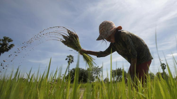 A girl works at a rice paddy field on the outskirts of Phnom Penh