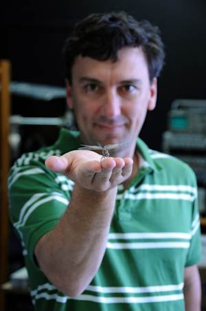 Dragonfly Shows Human-Like Power of Concentration