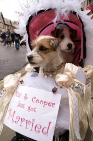 Doggie Weddings 2012
