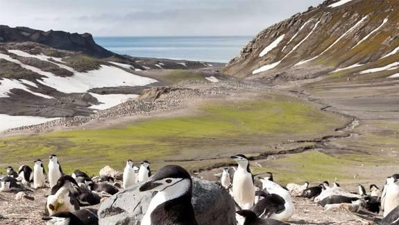 Too Hot for Love: Breeding Penguins Vanish from Antarctic Island
