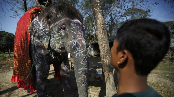 A mahout stands in front of his adorned elephant after decorating it for the elephant beauty contest organised during the Elephant Festival event at Sauraha in Chitwan