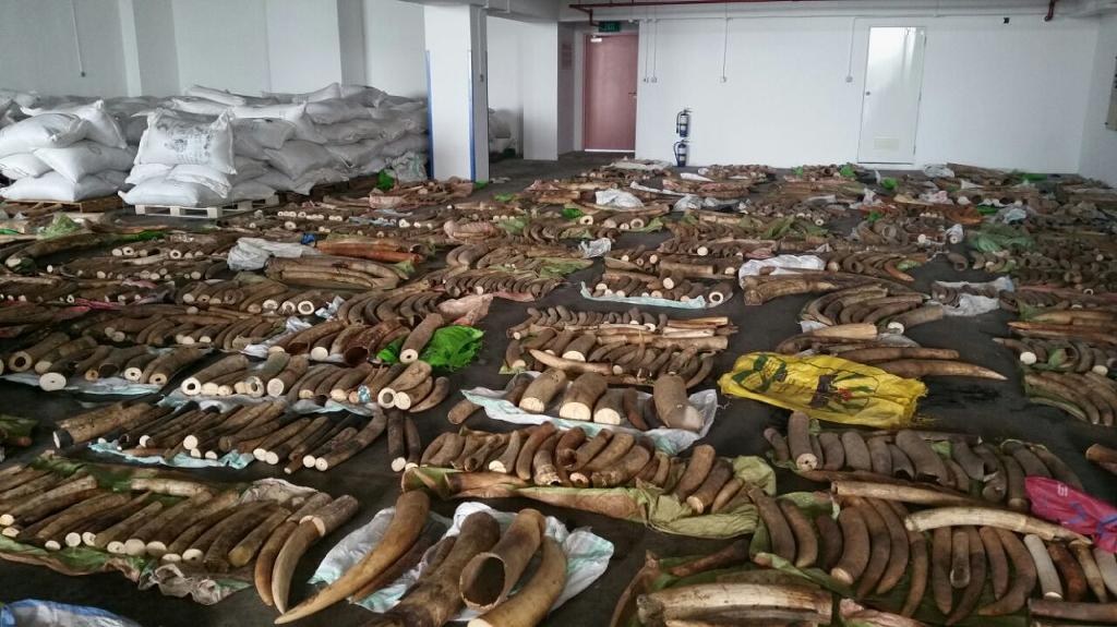 Activists demand Kenya probe after Asia ivory seizures