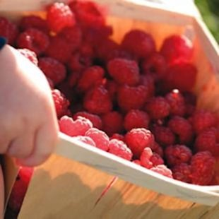 How To Pick The Best Summer Fruit