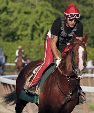 Exercise rider Willie Delgado gallops California Chrome around the track during a workout at Belmont Park, Friday, June 6, 2014, in Elmont, N.Y. The Kentucky Derby and Preakness Stakes winner will attempt to become the first Triple Crown winner since Affirmed in 1978 when he races in the146th running of the Belmont Stakes horse race on Saturday. (AP Photo/Garry Jones)