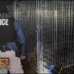 Officials: 22 Indicted In Multistate Dog-Fighting Ring