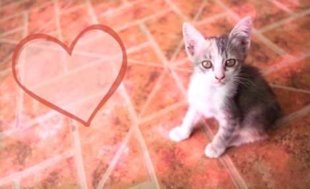 10 Reasons Why Your Cat is the Best Valentine's Date