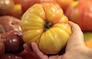 An organically grown Heirloom tomato is seen in the produce section at the Whole Foods grocery story in Ann Arbor, Michigan, March 8, 2012. REUTERS/Rebecca Cook