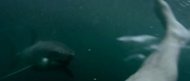 INSANE Video Of Guy Fighting Off Great White Shark In Harbour