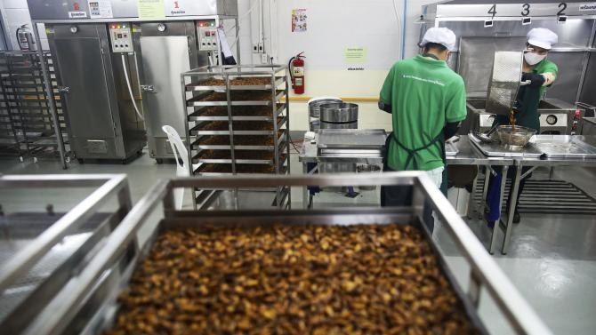 "Worker prepares deep fried insects in a factory producing ""HiSo"" snacks in Bangkok's suburbs"