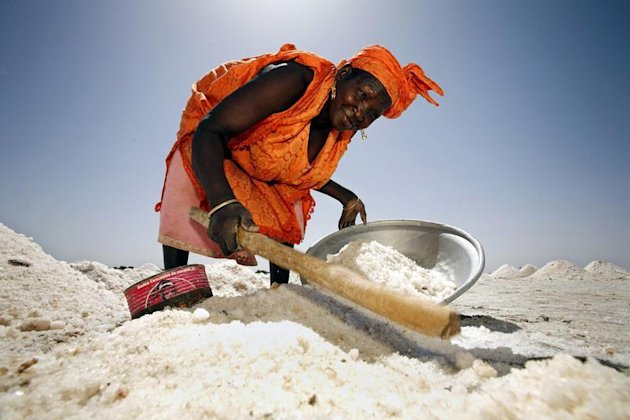 A woman uses a stick to gather salt on flats being cultivated for the white crystals near Senegal's northern town of Saint Louis