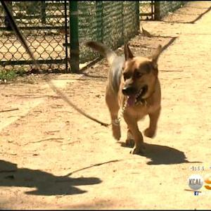 LA Now Fining Pet Owners Who Walk Dogs Without Leash