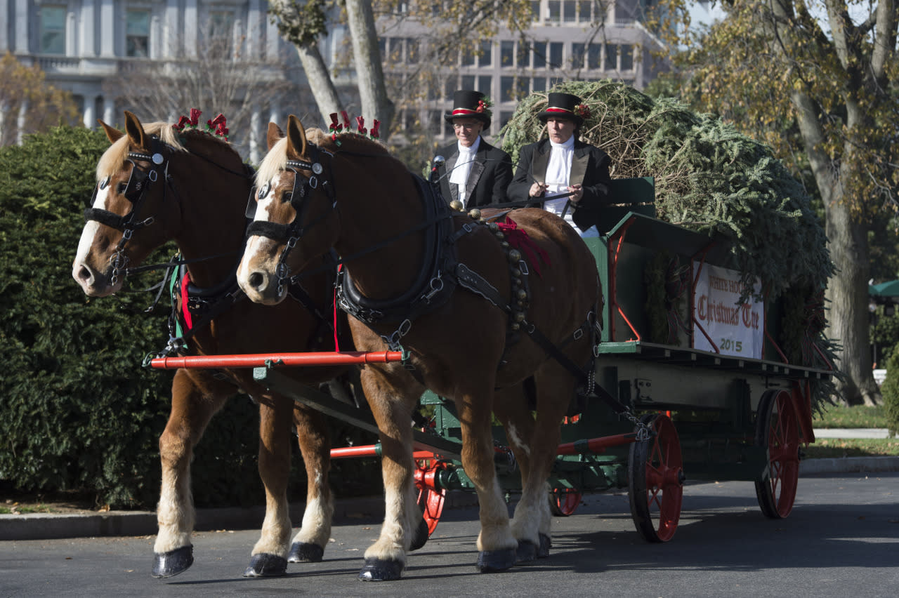 Michelle Obama welcomes the 2015 White House Christmas tree