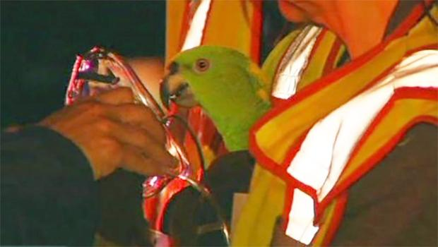 "Parrots in burning house call ""help"" and ""fire"""