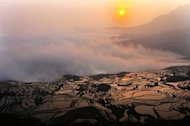 View of a hillslope of paddy fields in southwest China's Yunnan province. Police in Yunnan have detained a man suspected of murdering more than a dozen boys and young men, chopping up their bodies and selling the flesh to unsuspecting consumers, according to reports in the Chinese media