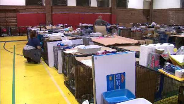 Temporary animal shelter set up for Sandy victims