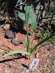 Plant garlic to keep bugs from other plants.