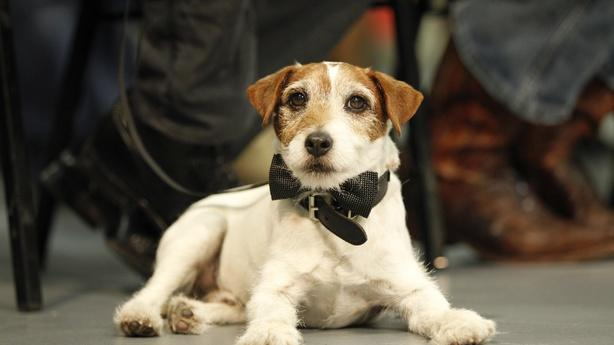 Uggie to Attend Correspondents' Dinner; Obama and Bloomberg Do Lunch