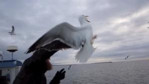 Fisherman catches a seagull mid-flight