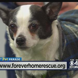 Pet Parade: Forever Home Rescue Of Medfield
