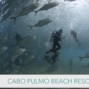 World's Best Diving & Resorts: Cabo Pulmo Resort
