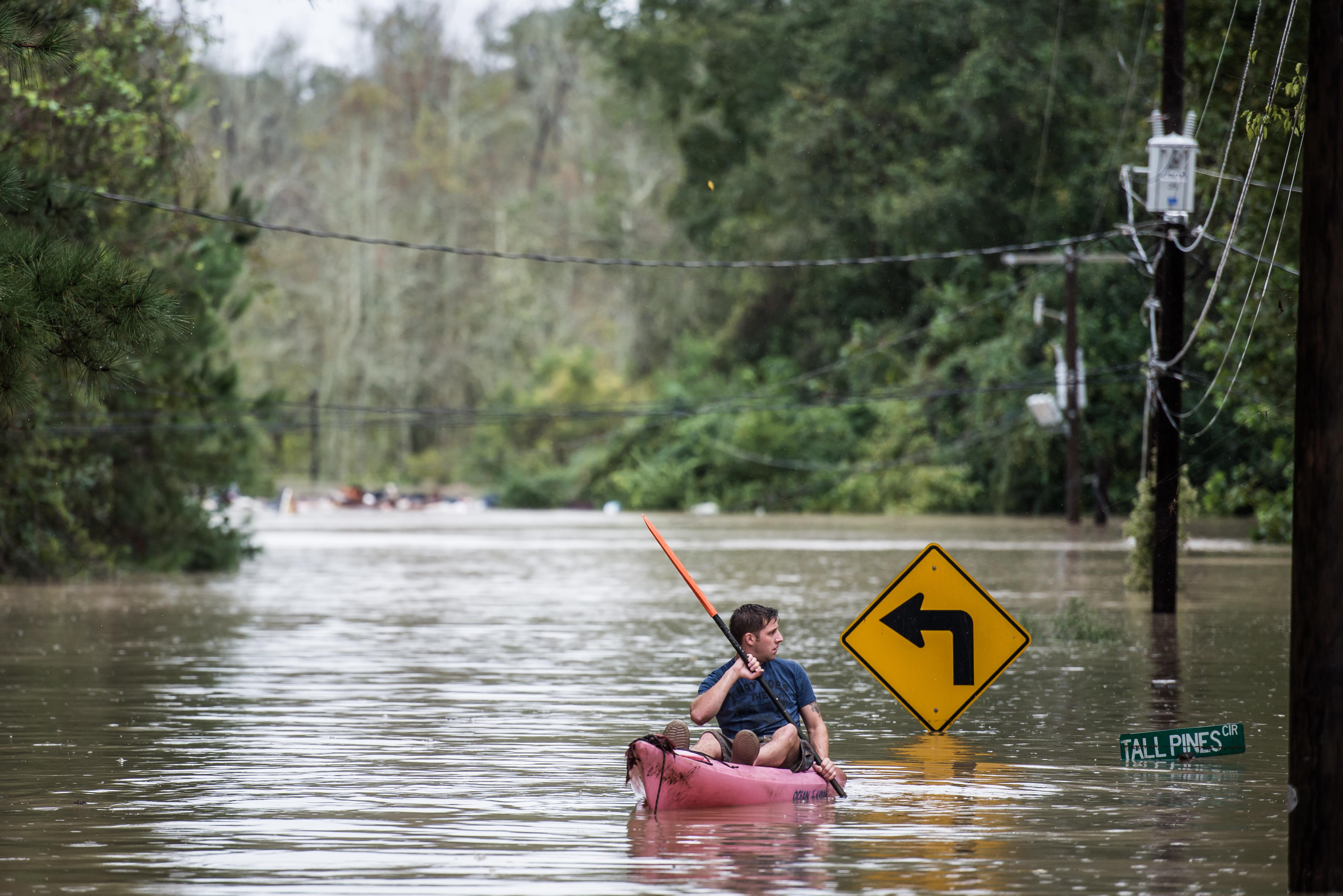 An invasive species of ant is handling South Carolina's floods better than humans