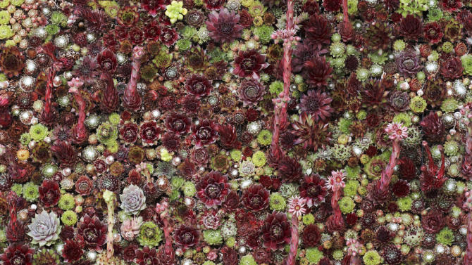 This undated publicity photo courtesy of Flora Grubb Gardens shows a close-up of a living succulent picture dominated by red plants in San Francisco. Living pictures, cuttings of assorted succulents woven together in everything from picture frames to pallet boxes, are hot among garden designers and landscapers this spring as an easy, modern way to add color and texture to an outdoor space.  (AP Photo/Flora Grubb Gardens, Caitlin Atkinson)