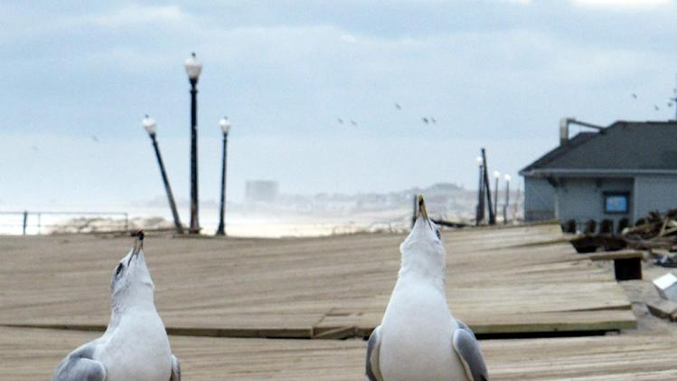 In this Nov. 15, 2012 photo, seagulls screech on the boardwalk in Ocean Grove, N.J. The boardwalk was warped and cracked by Superstorm Sandy. Coastal towns are racing to repair their boardwalks in time for next summer. (AP Photo/Wayne Parry)