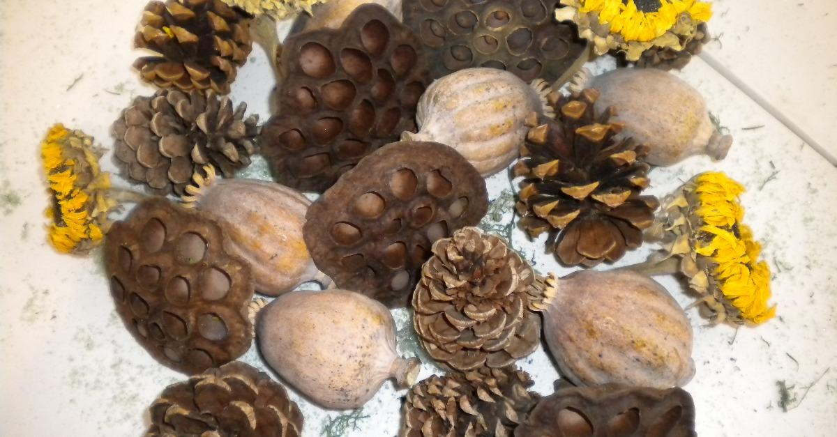 Dried pods and flowers for your crafting needs