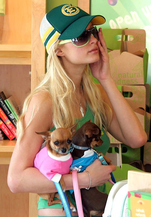 Paris Hilton and dog Tinkerbell
